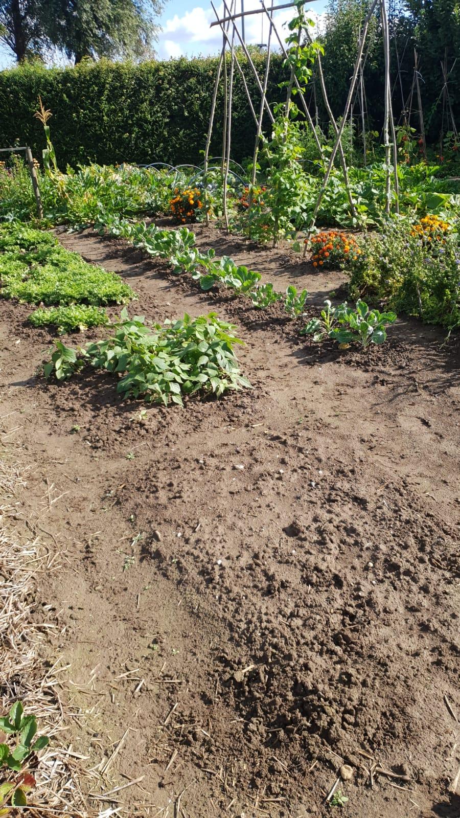 aanleg onderhoud tuinen dordrecht