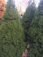 ziet-u-door-de-bomen-het-bos-niet-meer-e1564869536610.jpg