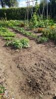 aanleg-onderhoud-tuinen-dordrecht.jpg