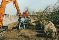 aanleg-tuinen-dordrecht-1-e1564922616512.jpg